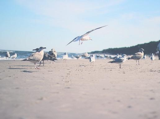 mrzeżyno ranking najlepsze plaże atrakcje