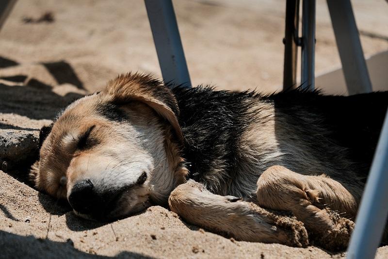 najlepsie psie plaze nad baltykiem
